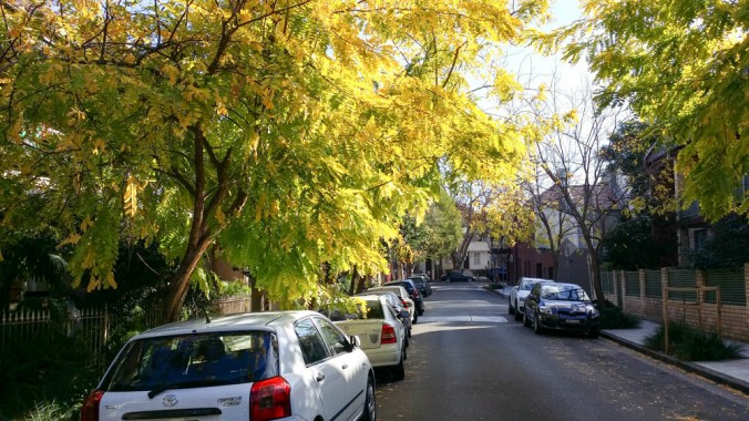 Weekends are great to explore quiet  Sydney side streets. Autumn view!